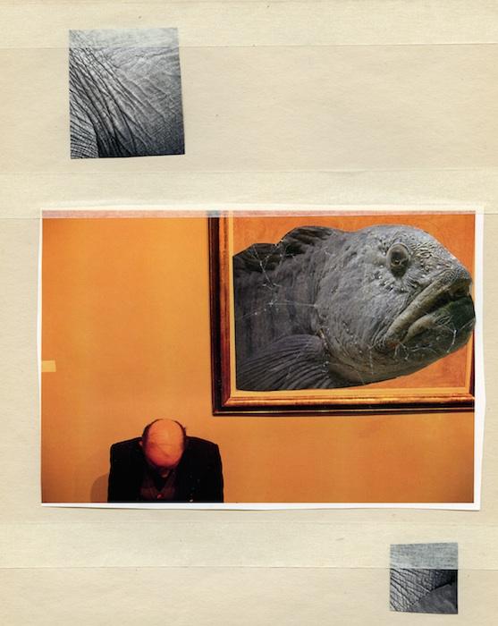 collage4-kopia