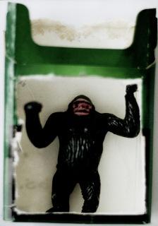 gorilla-kopia